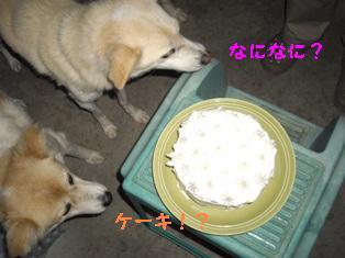 cake-gonpuri.JPG