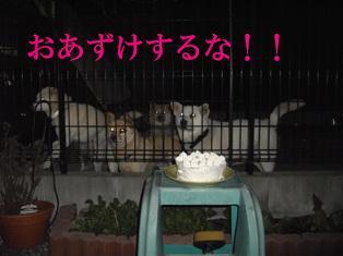 cake-net.JPG